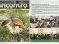 2013_Incontro-articolo-OperaPrima-n.67-Luglio